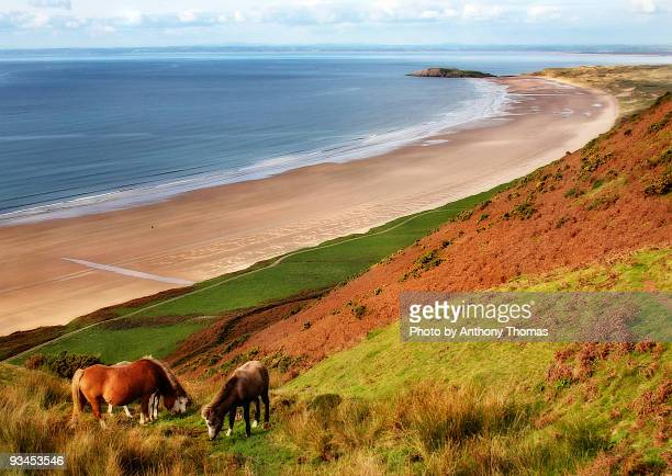 horses at rhossili beach, gower - gower peninsula stock photos and pictures