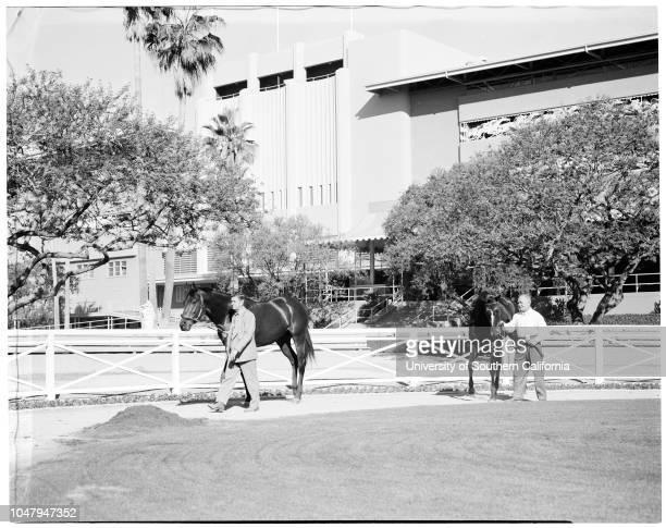 Horses at Santa Anita 30 November 1959 Caption slip reads 'Photographer Jensen Assignment Santa Anita horses 77 Silver SpoonJohn Ronnaho up 76...