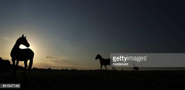 paarden op susrise - paard paardachtigen stockfoto's en -beelden