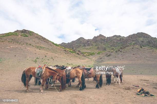 Horses at Yolyn Am in the Gurvan Saikhan mountains, South of Mongolia.