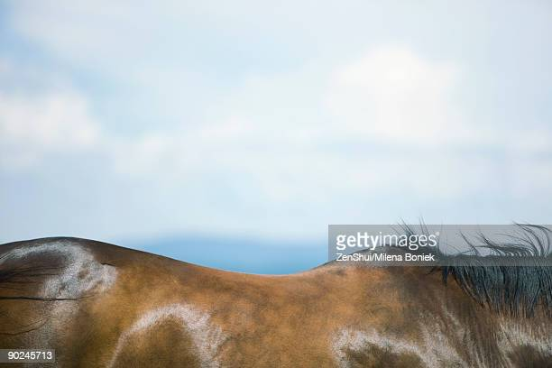 horse's back and flanks, close-up - animal body stock pictures, royalty-free photos & images