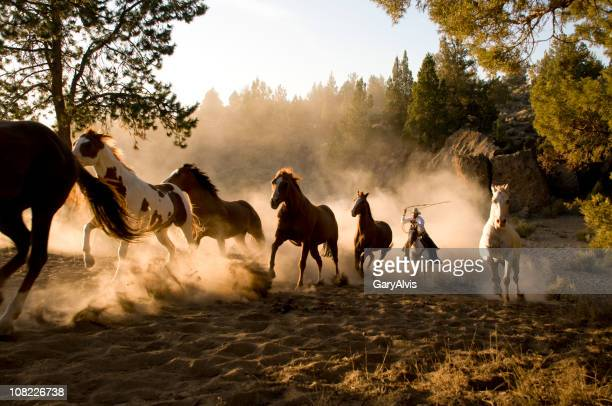 Horses Being Chased by Cowboy Through Desert