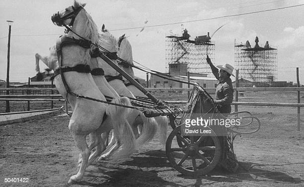 Horses being trained for the movie Ben Hur