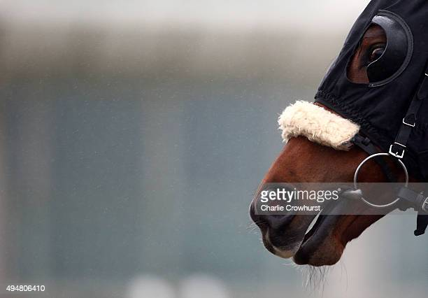 Horses blinkers at Lingfield Park on October 29 2015 in Lingfield England