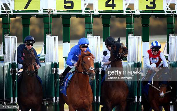 Horses break from the stalls during the All Weather Championships Finals Day at Lingfield Park on March 25 2016 in Lingfield England
