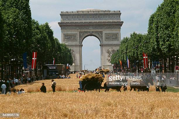 Horses carry away cut wheat stalks in a tumbrel on a wheat field on Avenue des ChampsElysees the main street in Paris during a oneday harvest...