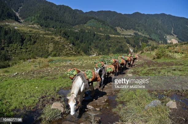 Horses carry vegetables as riders compete nearby in the 14th edition of the Hero MTB Himalaya mountain bike race in the northern Indian state of...