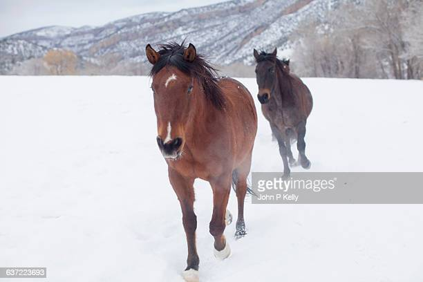 Horses charging through snow