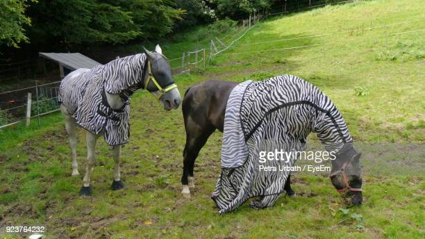 Horses Covered With Blanket Standing On Field