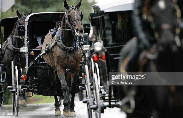 Horses draw Amish carriages during the funeral of slain Amish schoolgirl Anna Mae Stoltzfus October 6 2006 in Bart Township Pennsylvania Anna Mae...