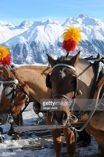 60 Hochwertige Horse Feathers. Bilder und Fotos - Getty Images on