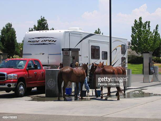 Horses drink water at a gas station pump next to a recreation vehicle Route 66 road trip Northern Arizona