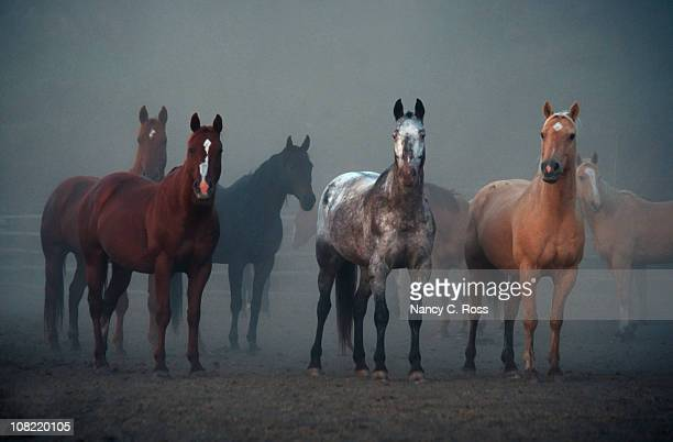 Horses, Ears Pointing Forward, Animal, Equestrian, Morning, Foggy, Outdoors