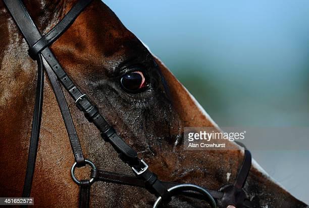 A horses eye at Epsom racecourse on July 03 2014 in Epsom England