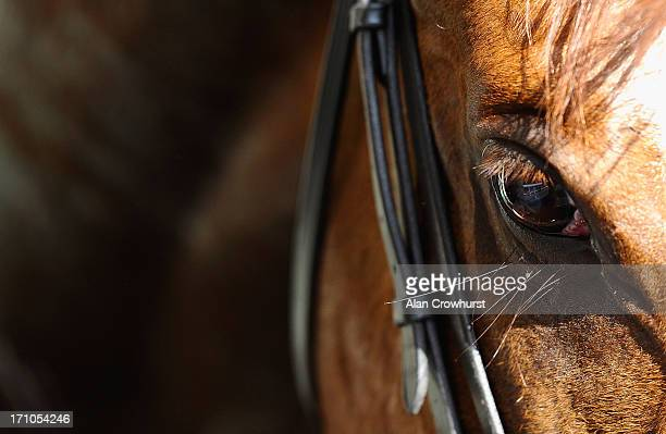 A horse's eye during day four of Royal Ascot at Ascot Racecourse on June 21 2013 in Ascot England