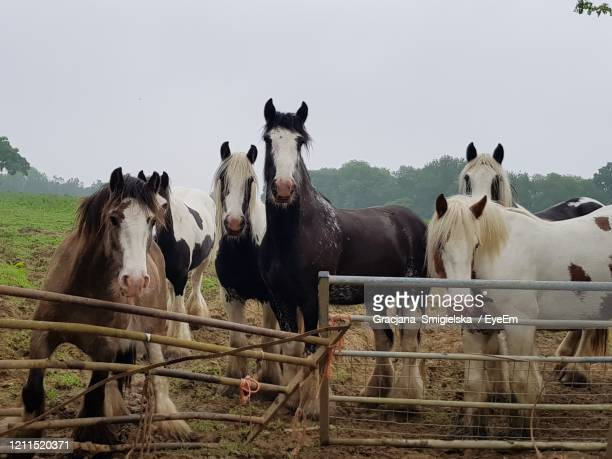 horses farm - horsedrawn stock pictures, royalty-free photos & images