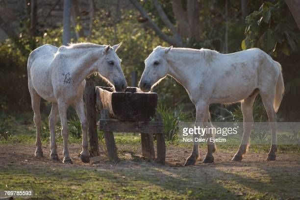 Horses Feeding From Trough On Field