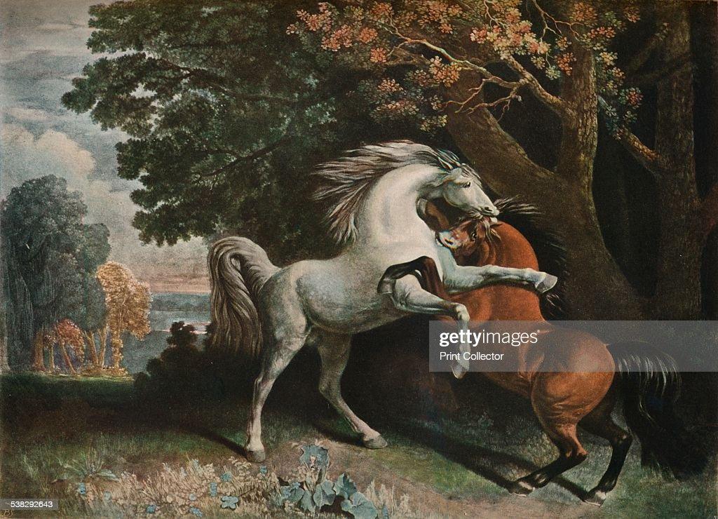 Horses Fighting, C18Th Century, (1902). : News Photo