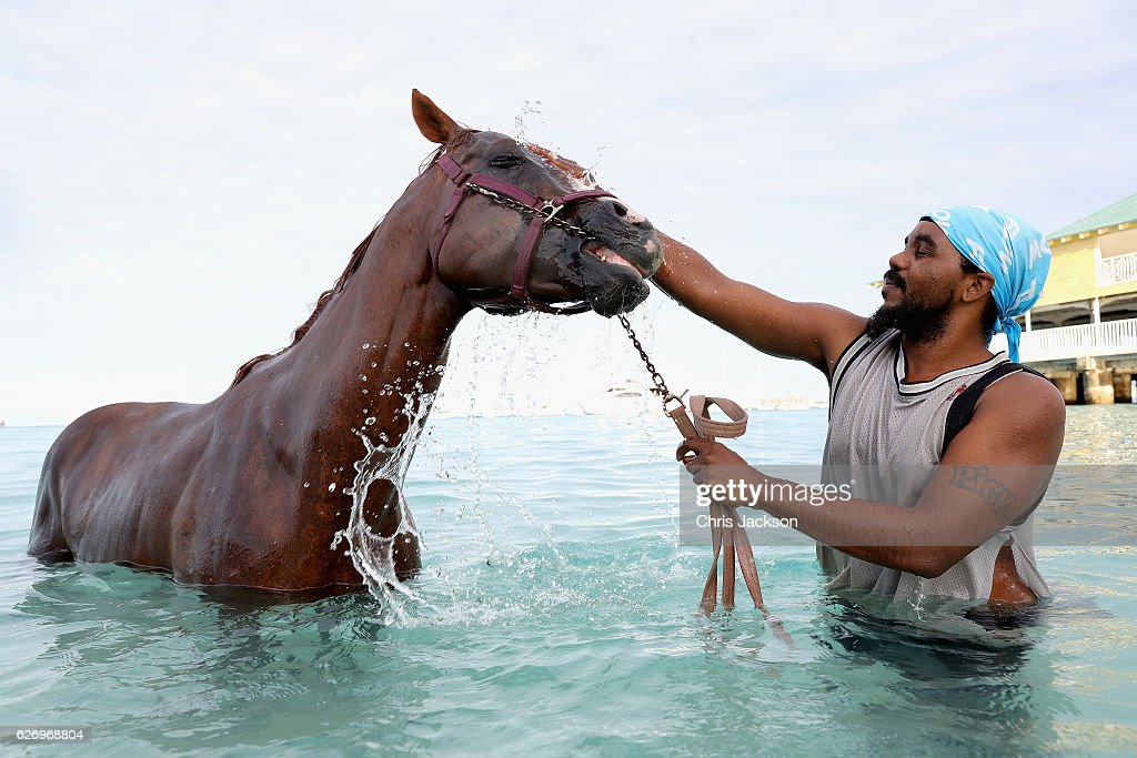 Garrison Horses Are Washed In The Sea In Preparation For Barbados 50 Years of Independence Celebrations : Nachrichtenfoto