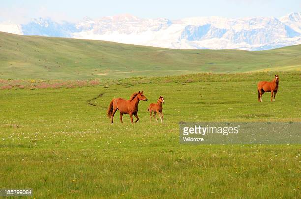 horses gallop across mountain meadow - foothills stock pictures, royalty-free photos & images