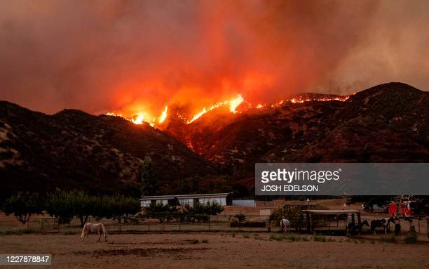 Horses graze as flames from the Apple fire skirt a ridge in a residential area of Banning, California on August 1, 2020. - 4,125 acres have burn in...