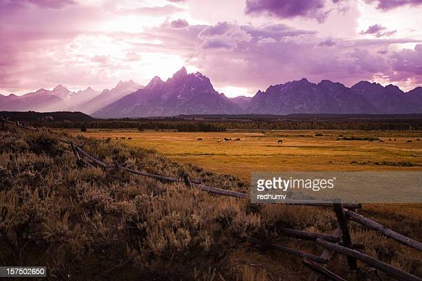 Horses graze at Sunset on the Tetons