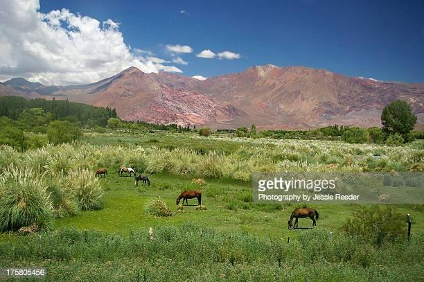 Horses graze in Andes near Mendoza Argentina