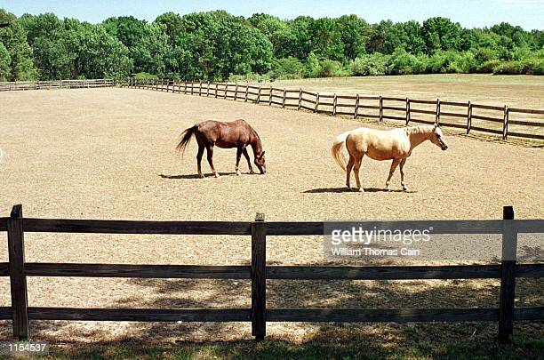 Horses graze on dry grass Tuesday August 10 in Lower Makefield Bucks County Pa Federal officials have declared drought disasters in New Jersey 34...