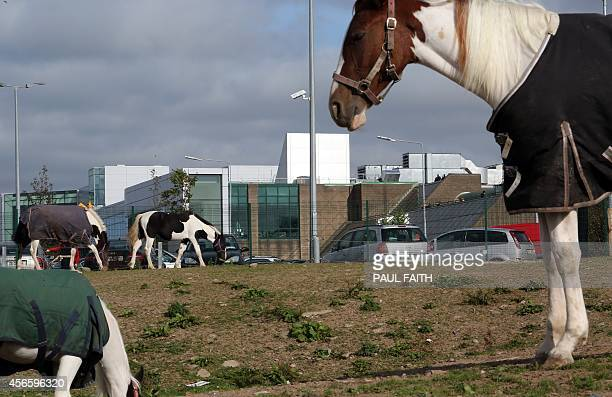 Horses graze on land beside The Apple campus in Cork southern Ireland on October 2 2014 Perched on top of a hill overlooking the Irish city of Cork...