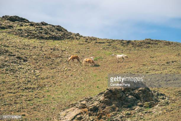 Horses grazing at the top of cliff in central Mongolia.