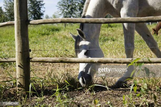 horses grazing autumn day - sorocaba stock pictures, royalty-free photos & images