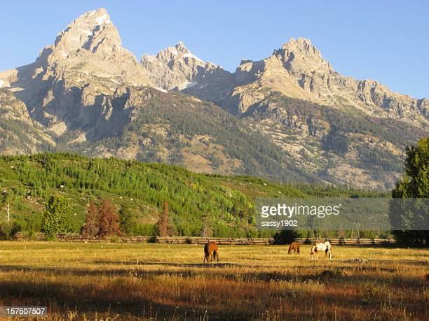 Horses Grazing  Grand Teton National Park