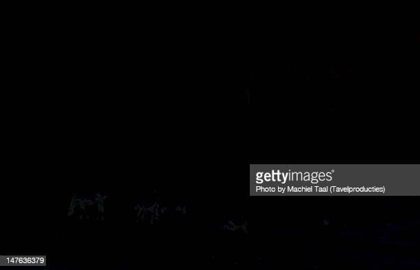 horses grazing grass - taal foto e immagini stock