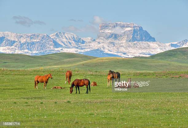 Horses grazing in a meadow with mountains in background