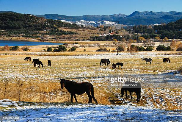 Horses grazing in a mountain meadow