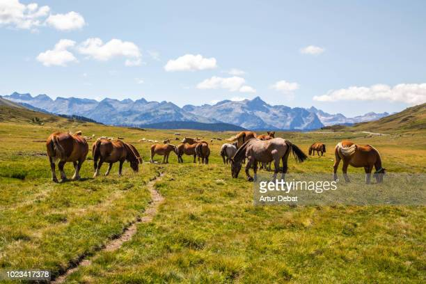 Horses grazing in nature with stunning mountain view.