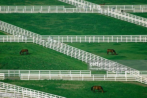 horses grazing in pasture, elevated view - lexington kentucky fotografías e imágenes de stock