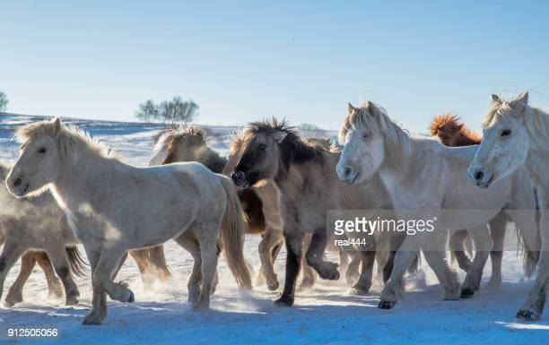 horses grazing in pasture in winter - foothills stock pictures, royalty-free photos & images