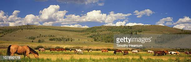 horses grazing in pasture with hills beyond - timothy hearsum photos et images de collection