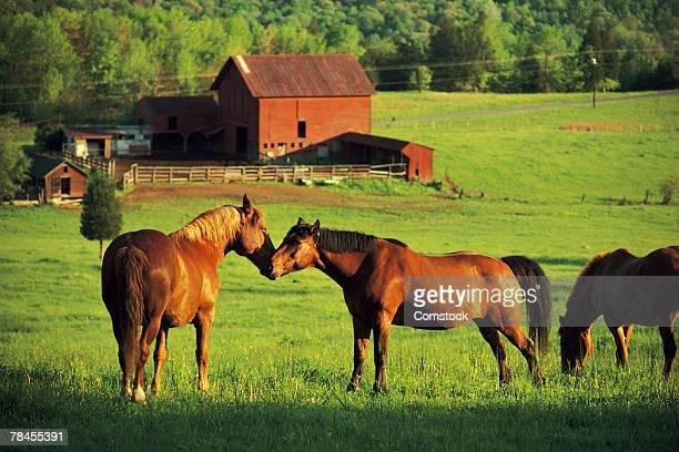 Horses grazing in sunny pasture