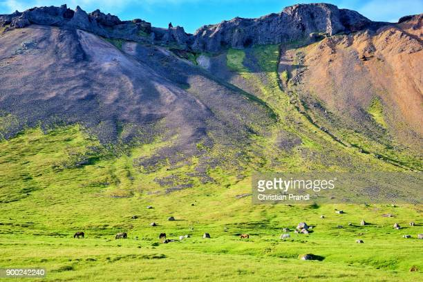 Horses grazing on a pasture, mountain behind, Snaefellsnes peninsula, Iceland