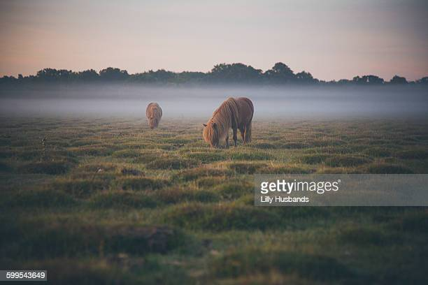 Horses grazing on field in foggy weather