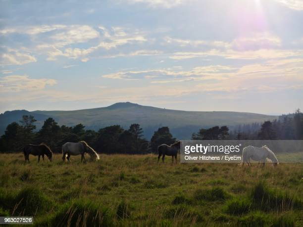 Horses Grazing On Grassy Field Against Cloudy Sky During Sunset