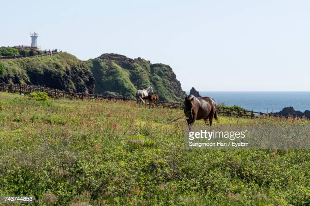 Horses Grazing On Grassy Field Against Sky During Sunny Day
