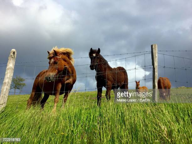horses grazing on grassy field - lopez stock pictures, royalty-free photos & images