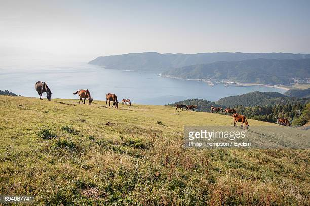 Horses Grazing On Grassy Hill By Sea Against Clear Sky