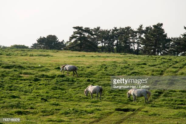 Horses Grazing On Green Landscape Against Clear Sky