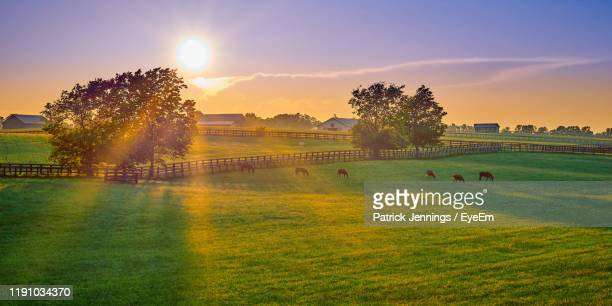 horses grazing on land during sunset - kentucky stock pictures, royalty-free photos & images