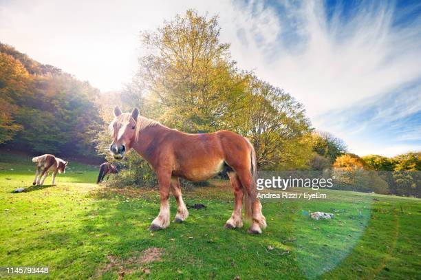 horses grazing on land - andrea rizzi stockfoto's en -beelden