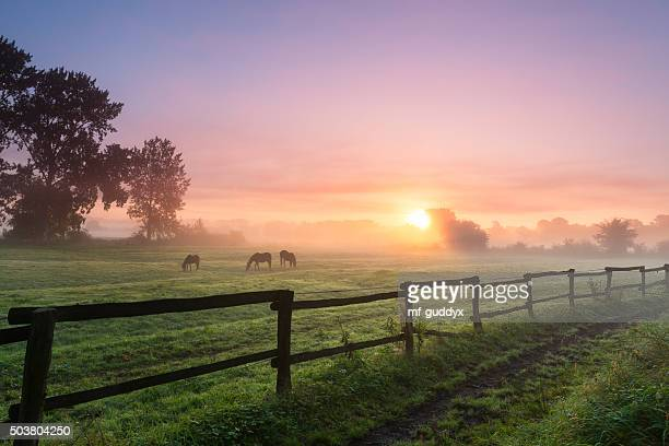 horses grazing the grass on a foggy morning - horse stock pictures, royalty-free photos & images